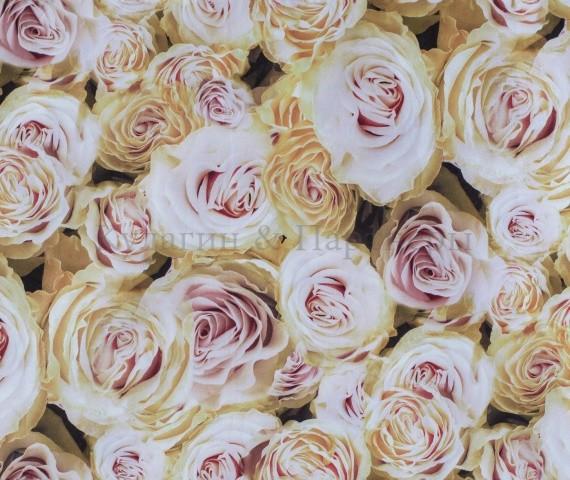 Обивочная ткань Rose 02
