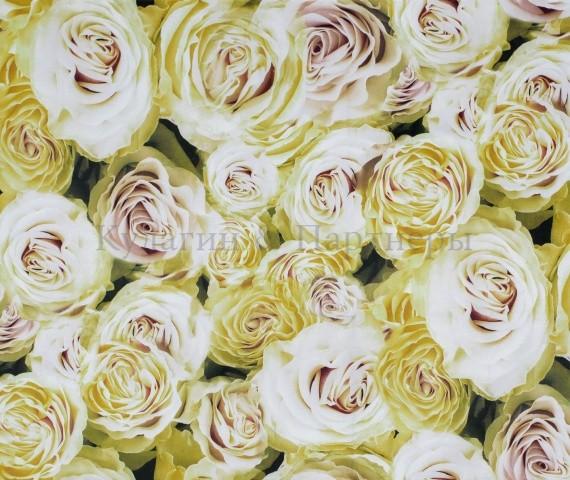 Обивочная ткань Rose